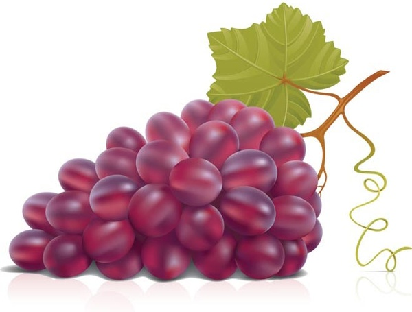 cartoon grapes clipart clipartme