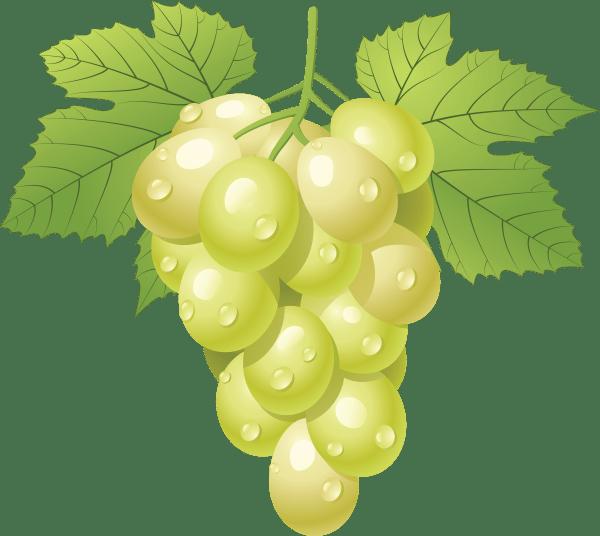 grapes free clipart grape vineyard