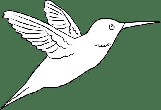 hummingbird clipart free