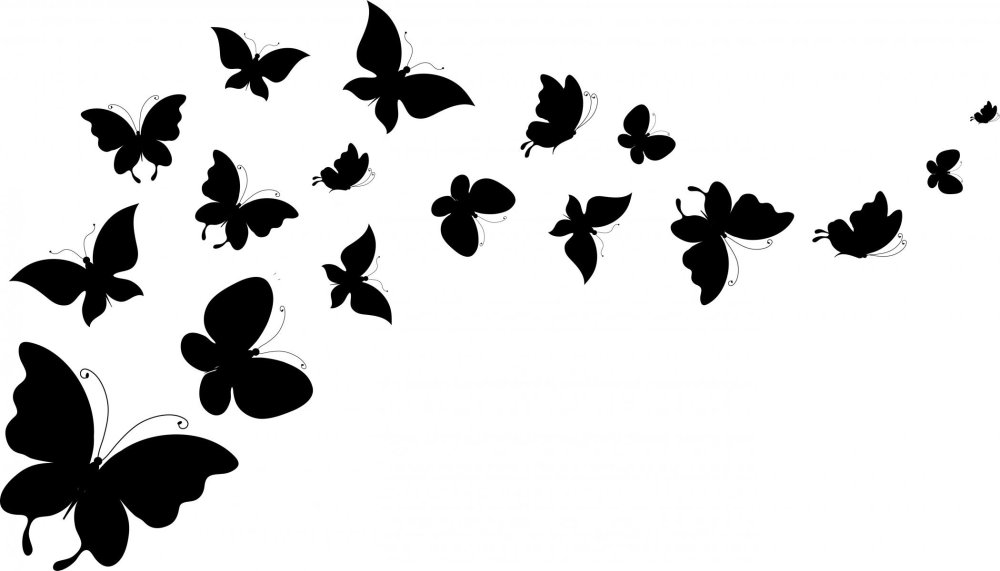 medium resolution of butterfly black and white image 44692