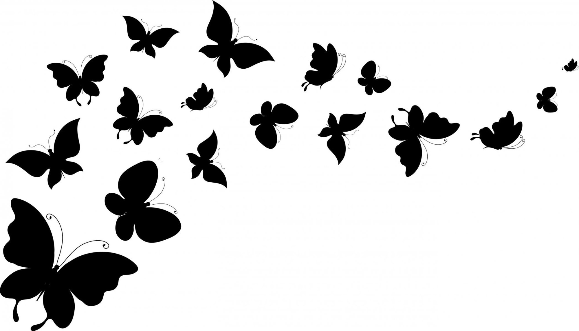 hight resolution of butterfly black and white image 44692