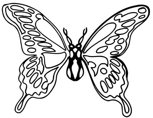 small resolution of butterfly black butterfly clipart black and white png