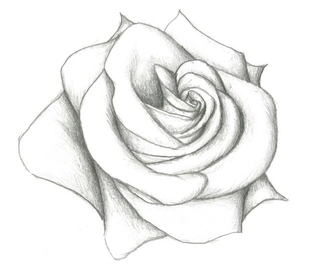 flower drawing Flowers drawings in pencil for kids simple rose jpg ...