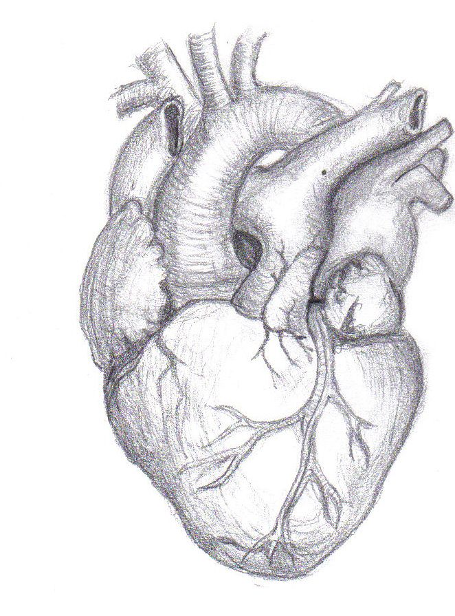 Real Heart Drawing : heart, drawing, Heart, Drawing, Cliparting.com