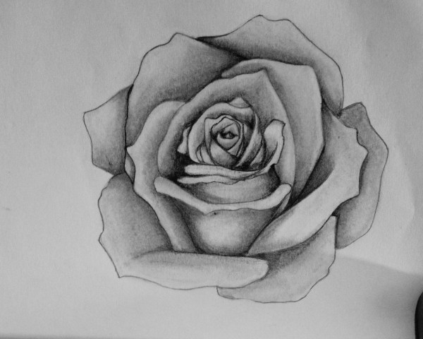 Drawings Of Roses Easy Rose Drawing Outline Inspires