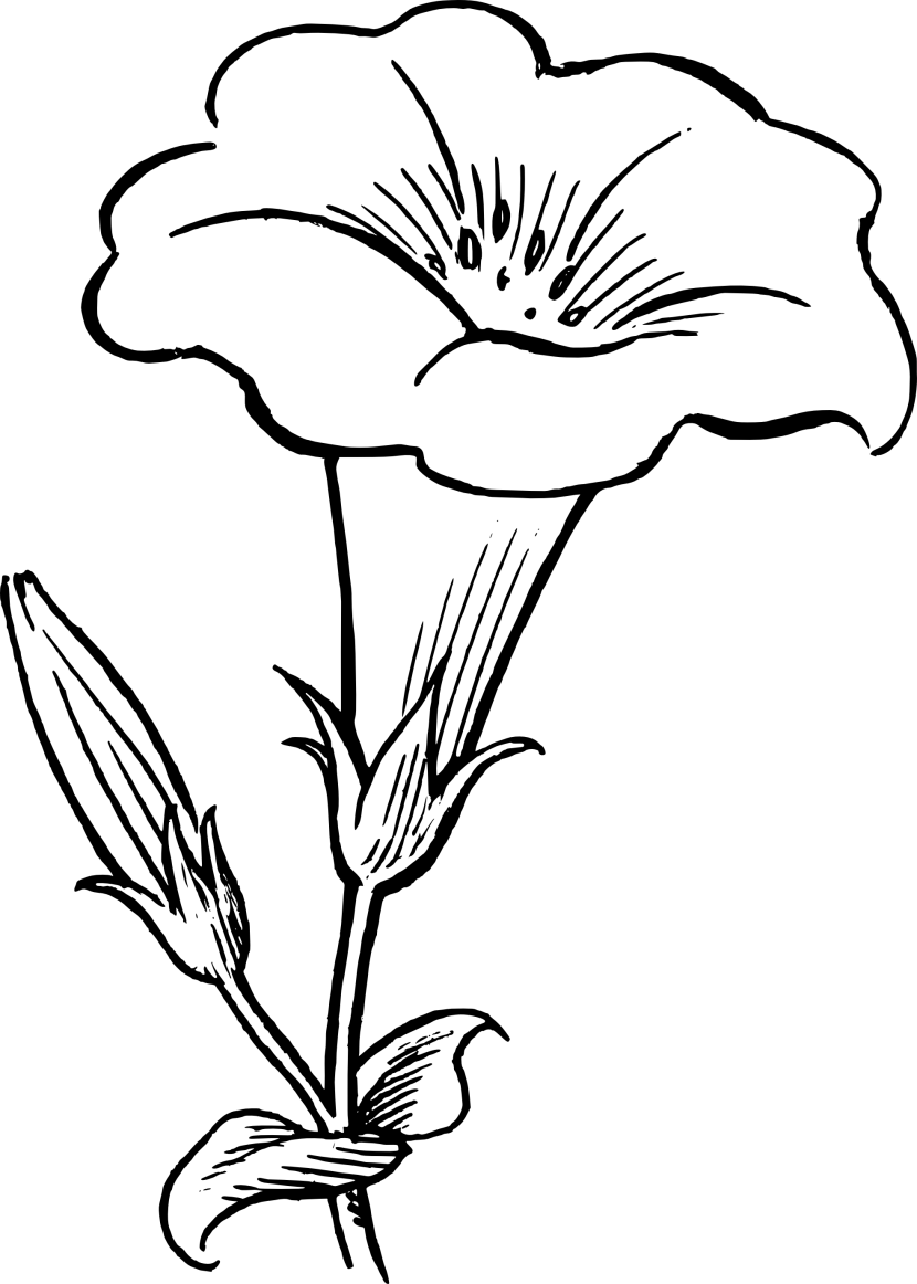 hight resolution of flower clipart black and white