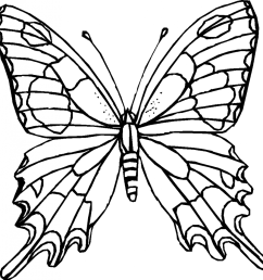 butterfly clipart black and white 15160 [ 940 x 942 Pixel ]