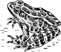 Best Frog Clipart Black And White 13264 Clipartioncom