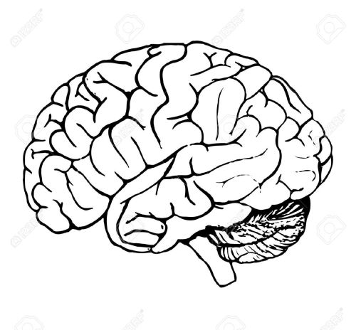 small resolution of brain clipart 6071