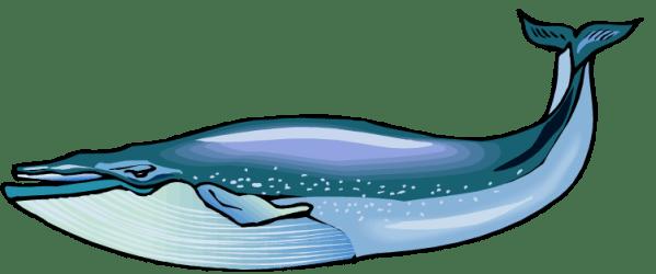 Blue whale clipart Clipartix