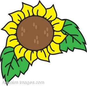 sunflower clip art free clipart