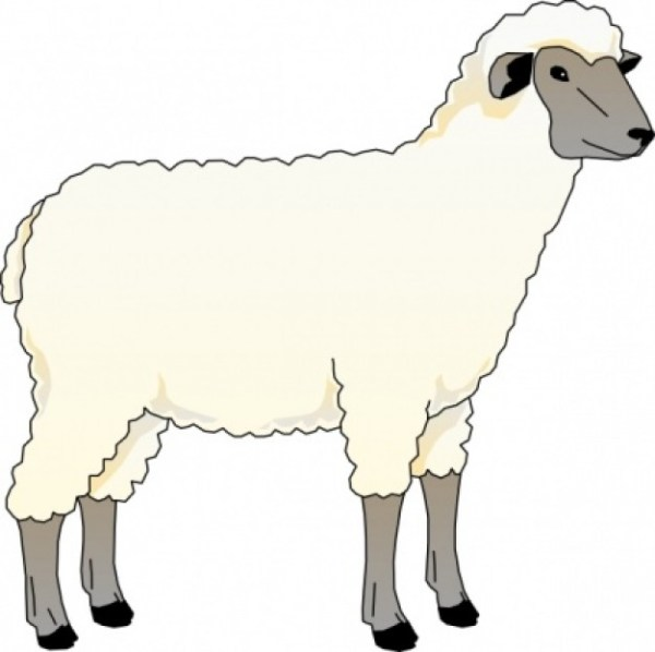 free sheep clipart - clipartix