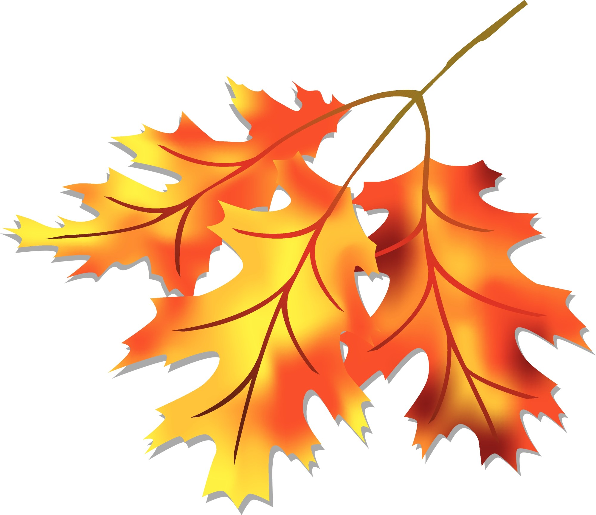 hight resolution of leaves image fall leaf clipart no background clipartbold