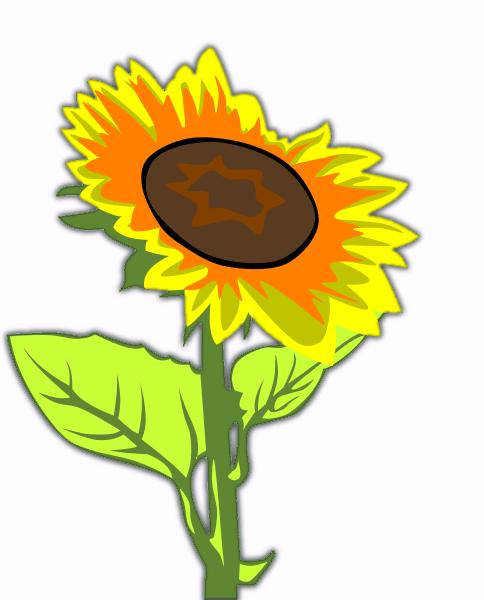 free sunflower clipart