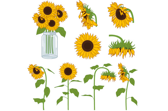 sunflower clip art free printable