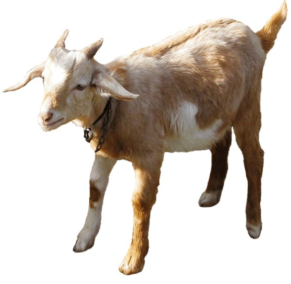 two goats clipart