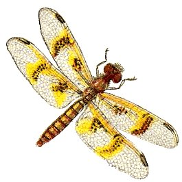dragonfly clip art stock