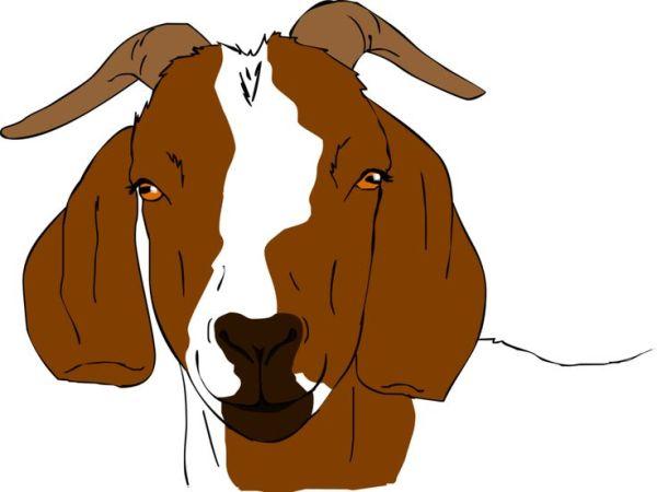 free goat clipart - clipartix