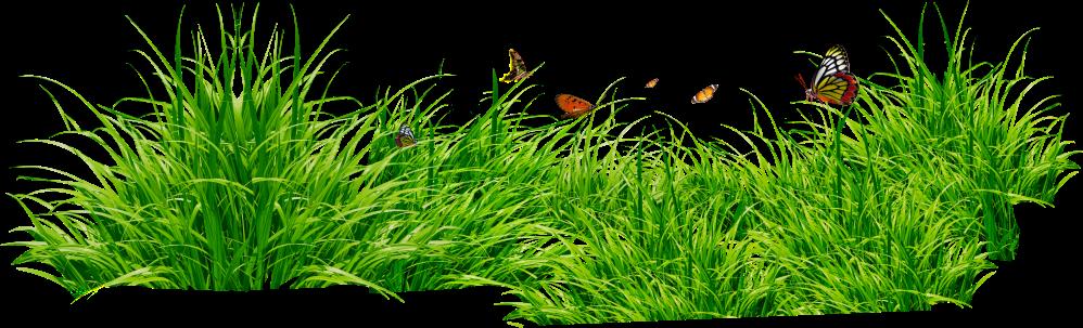 medium resolution of grass clipart 5