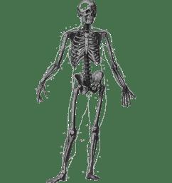 human clipart human skeleton [ 2400 x 2400 Pixel ]