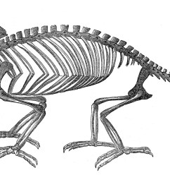 vintage clip art strange chameleon skeleton halloween the clipartcow [ 1600 x 884 Pixel ]