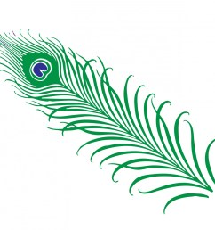 peacock feather clipart free stock photo public domain pictures 5 [ 1920 x 1480 Pixel ]