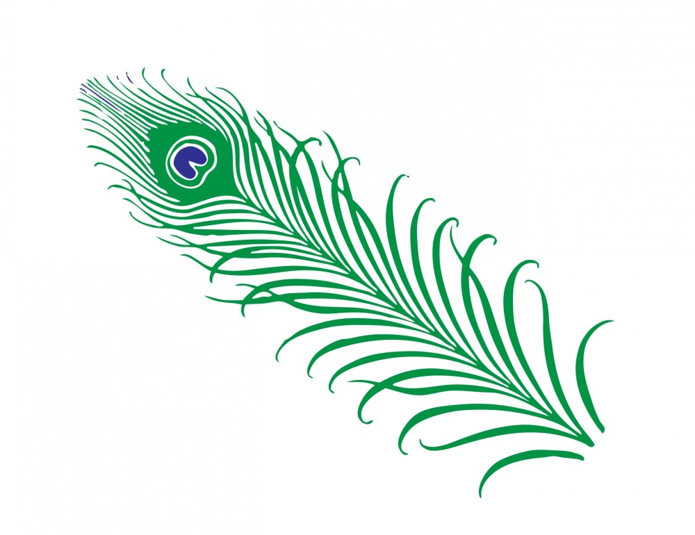 medium resolution of peacock feather clipart free stock photo public domain pictures 5
