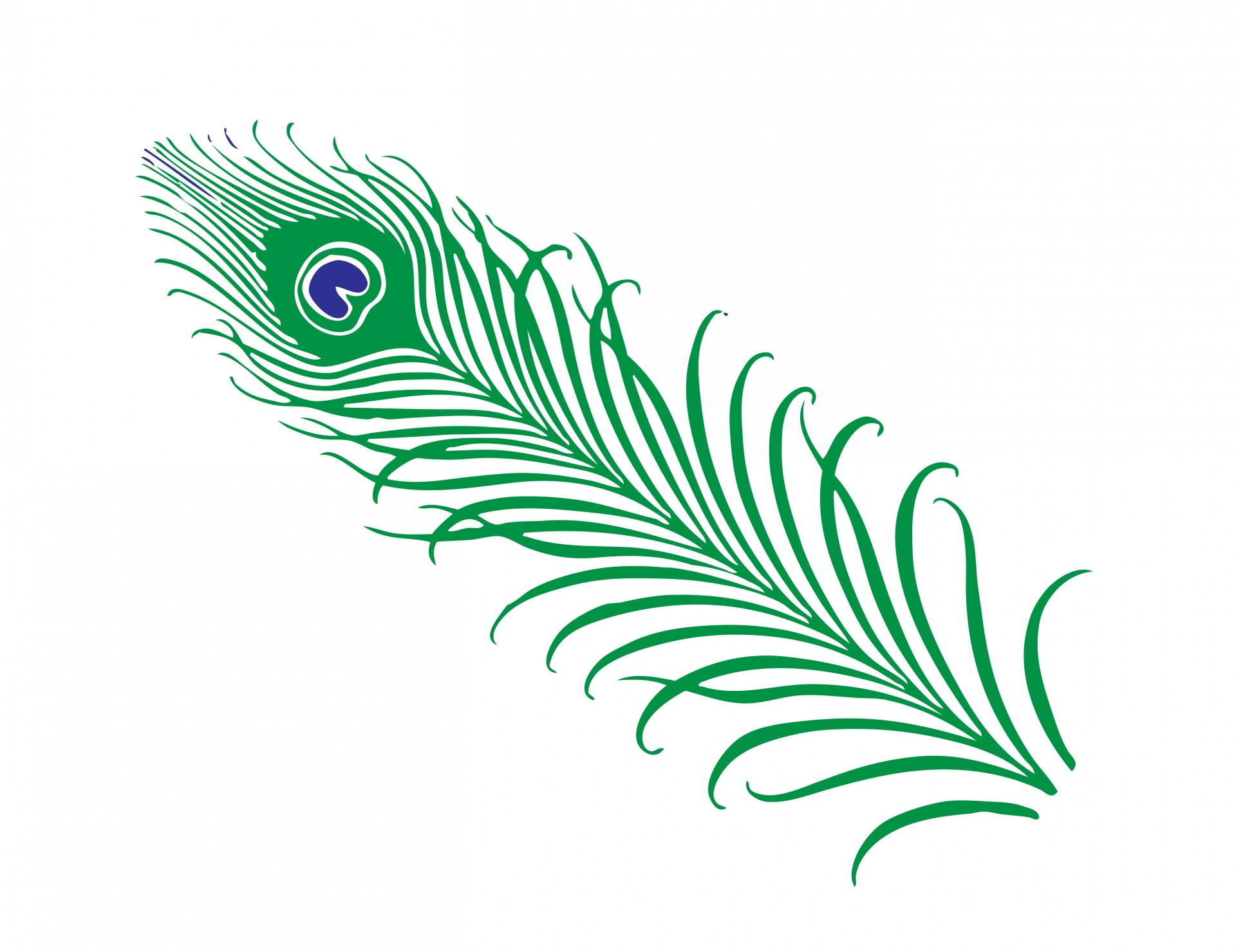 hight resolution of peacock feather clipart free stock photo public domain pictures 5