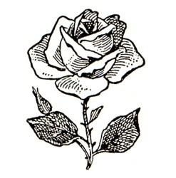 clip roses clipart flowers rose flower clipartix