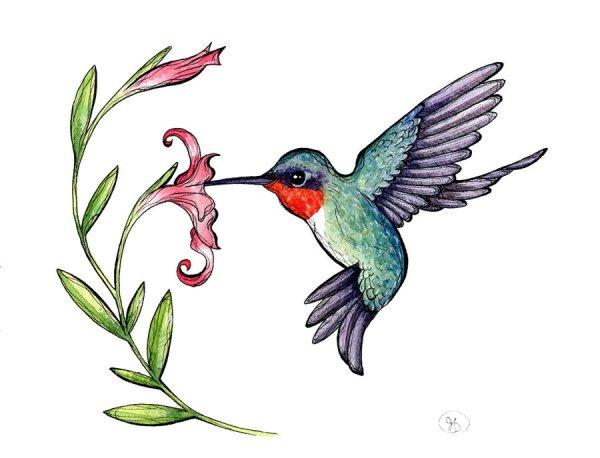 free hummingbird clipart