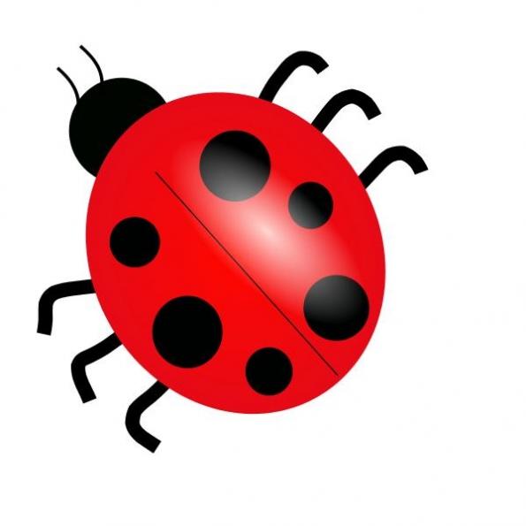 insect clip art bug cartoon clipart