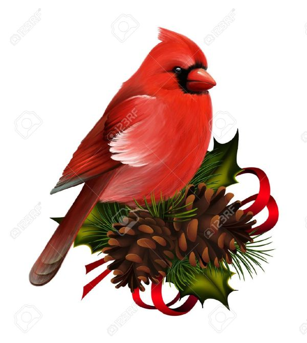 clipart of cardinal - clipartix