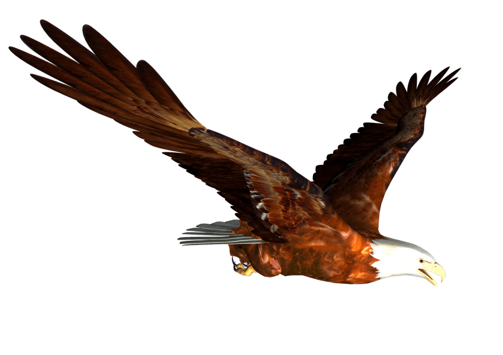medium resolution of bald eagle free eagle clip art pictures 10