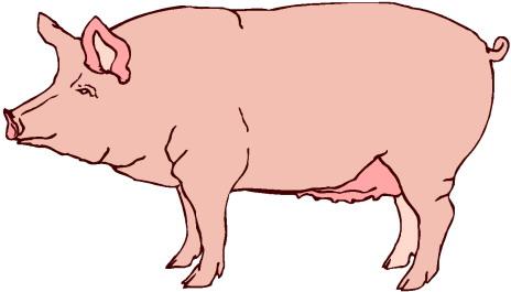 free pig clipart - clipartix
