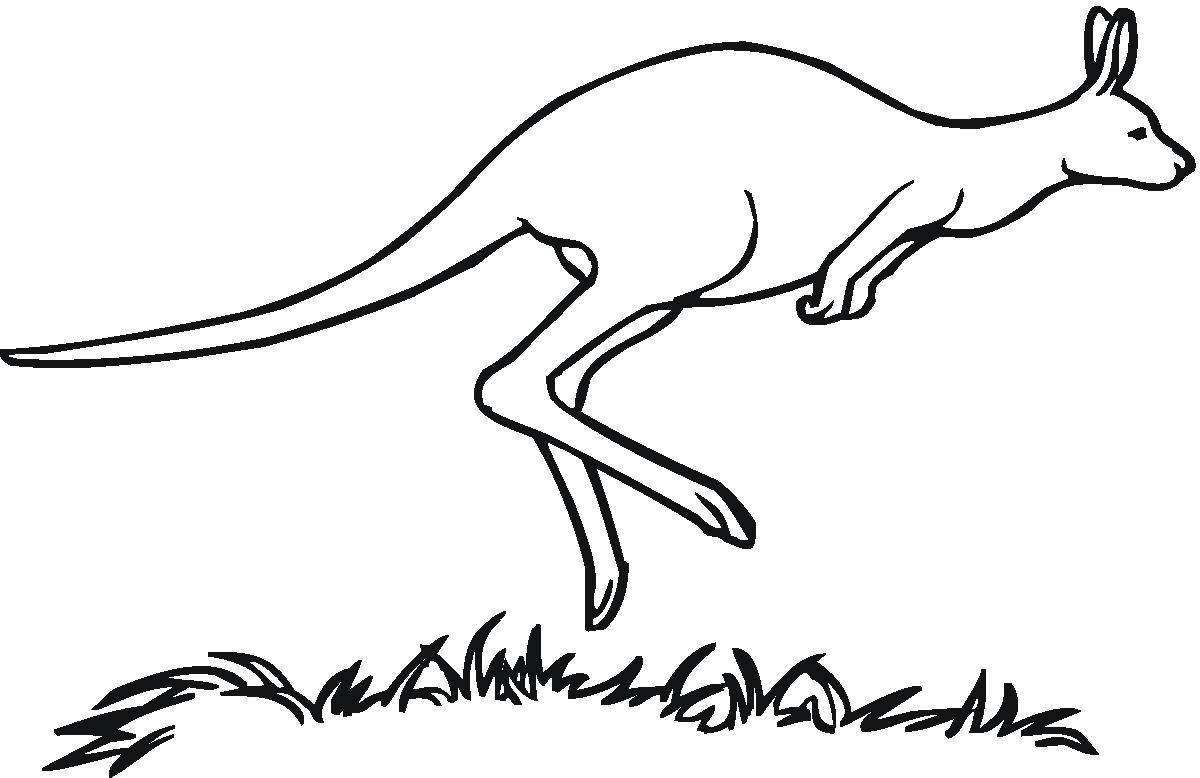 hight resolution of kangaroo clip art kangaroo clipart fans 4 clipartandscrap