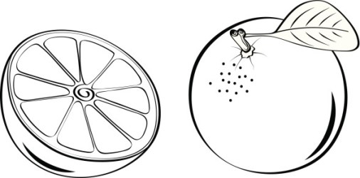 orange clipart vector simple lines illustration letters fruit clipartix food