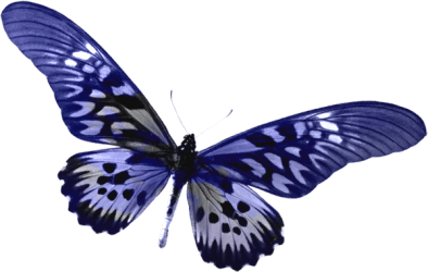 butterfly transparent Blue transparent butterfly clipart gallery yopriceville high png Clipartix