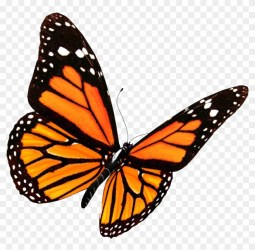 Free Butterfly Transparent Clipart Pictures Clipartix
