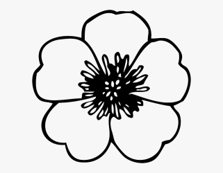 Outline Clipart Cherry Poppy Flower Colouring Pages Free Transparent Clipart ClipartKey