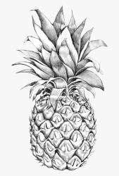 Drawing Detail Pineapple Pineapple Outline Free Transparent Clipart ClipartKey