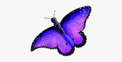 Collection Of Free Butterflies Transparent Background Enchanted Butterfly Clipart Free Transparent Clipart ClipartKey