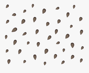 watermelon seed clip clipart clipartkey