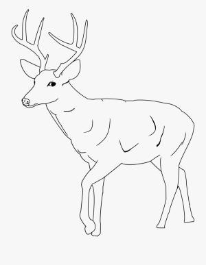 deer drawing easy drawings mule blackboard clipart transparent clipartkey