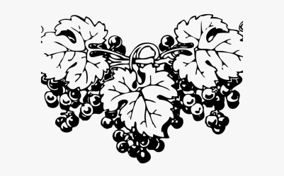Grapes Clipart Outline Grapes Png Black And White Free Transparent Clipart ClipartKey