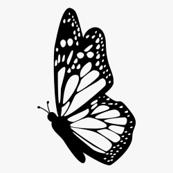 Interesting Facts About Butterflies Butterfly Outline Side View Free Transparent Clipart ClipartKey
