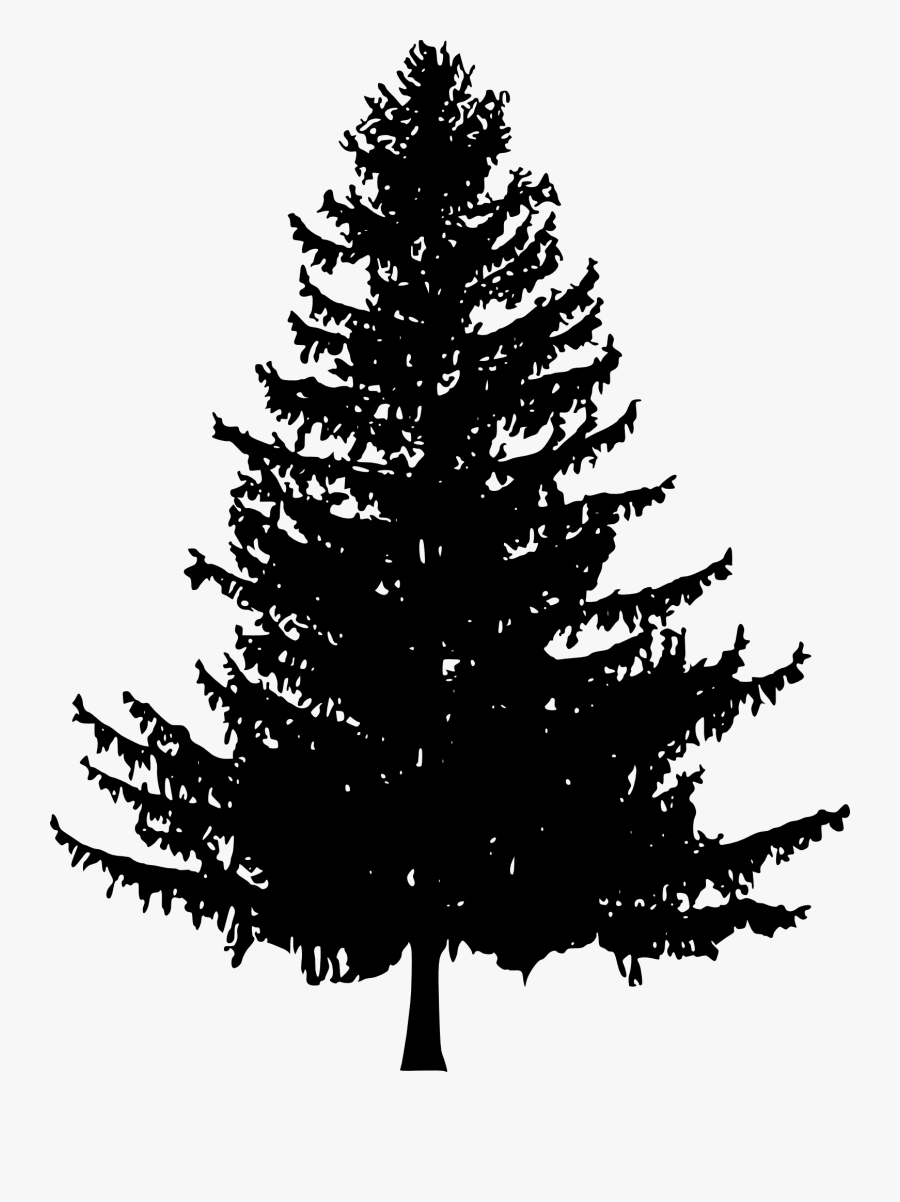 Pine Tree Line Drawing : drawing, Drawing, Silhouette, Transparent, Clipart, ClipartKey