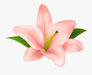 Transparent Background Flower Clipart