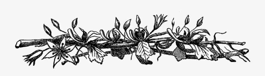 Rustic Flower Clipart Transparent Black And White Flower Border Png Free Transparent Clipart ClipartKey