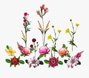 Vector flower vector Art flower Vector vector Flower Vector Flowers Png Free Transparent Clipart ClipartKey