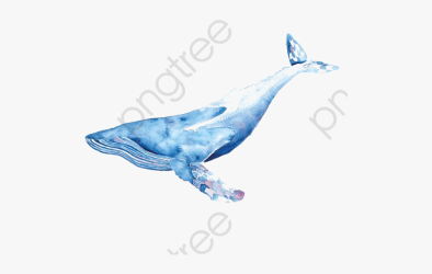 Whale Clipart Real Blue Whale Png Draw Free Transparent Clipart ClipartKey